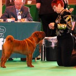 Dixie at Crufts 2010