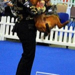 Dixie - Pet Plan Junior Stakes Winner 2010