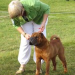 Dixie winning Open Dog at Driffield 2012