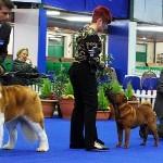 Pet Plan Junior Stakes