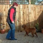 Dixie Dean - Shar Pei Puppy