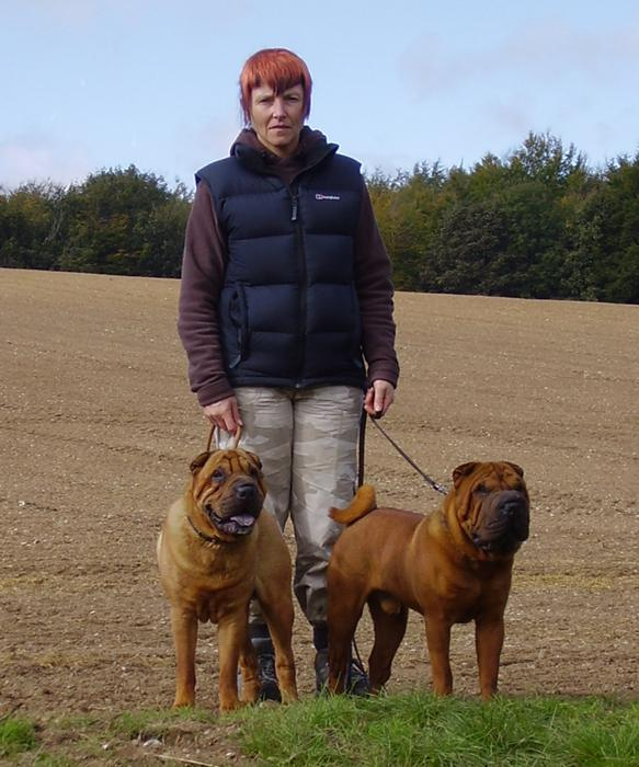 Two Shar Pei on a walk in autumn