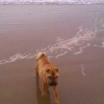 Tippi on the beach