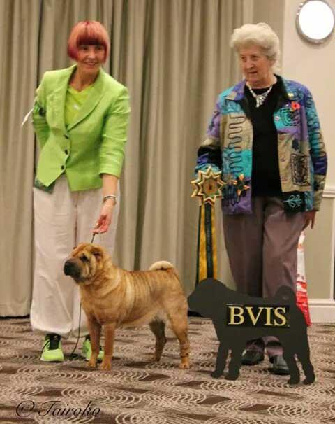 Tippi Best Veteran SPOTY