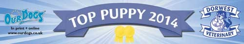 Our Dogs Top Shar Pei Puppy 2014
